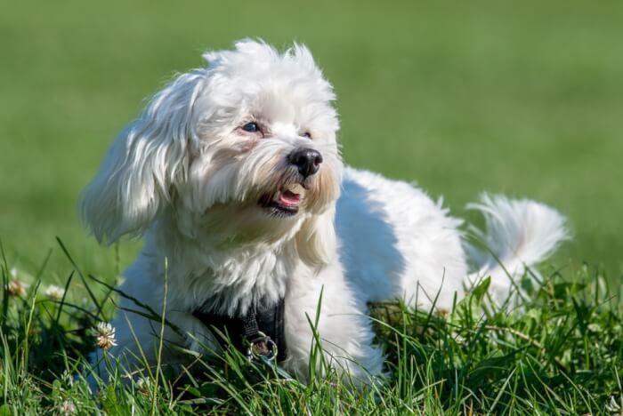 Lima Anjing Lucu yang Paling Populer di Dunia