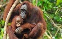 Hewan Langka Yang Terancam Punah Di Indonesia