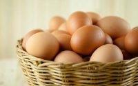 Apa Bedanya Telur Ayam Kampung dengan Telur Ayam Biasa?