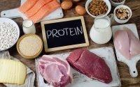Pentingnya asupan protein