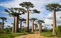 Alasan Madagascar Jadi Destinasi Wisata Menarik di Dunia