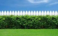 tanaman pagar tips merawatnya