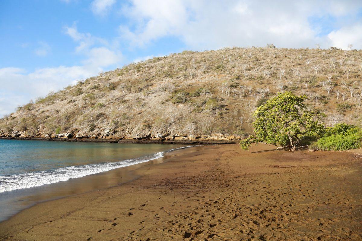 Punta Cormorant - Ekuador