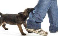 Langkah Penanganan yang Harus Dilakukan Ketika Digigit Anjing