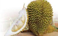 Tips Memilih Durian Matang dan Manis
