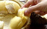Dampak Makan Durian Terlalu Banyak