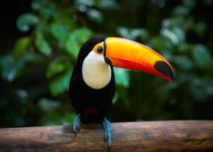 jenis-jenis burung termahal