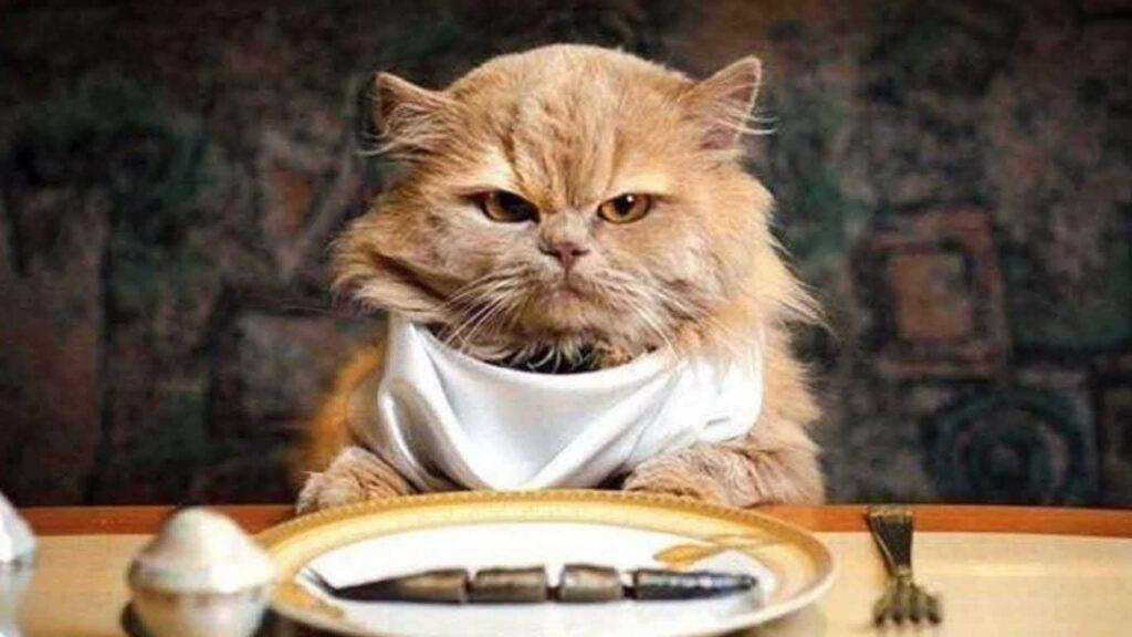 Kesalahan Terbesar Saat Memberi Makan Kucing