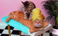 Lakukan Hal Ini Saat Kucing Peliharaan Berkelahi