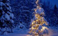 sejarah pohon natal