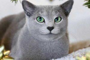 kucing umur panjang
