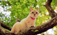 Bahasa Tubuh Kucing Terancam