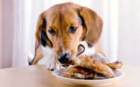 Makanan Manusia Baik Untuk Anjing