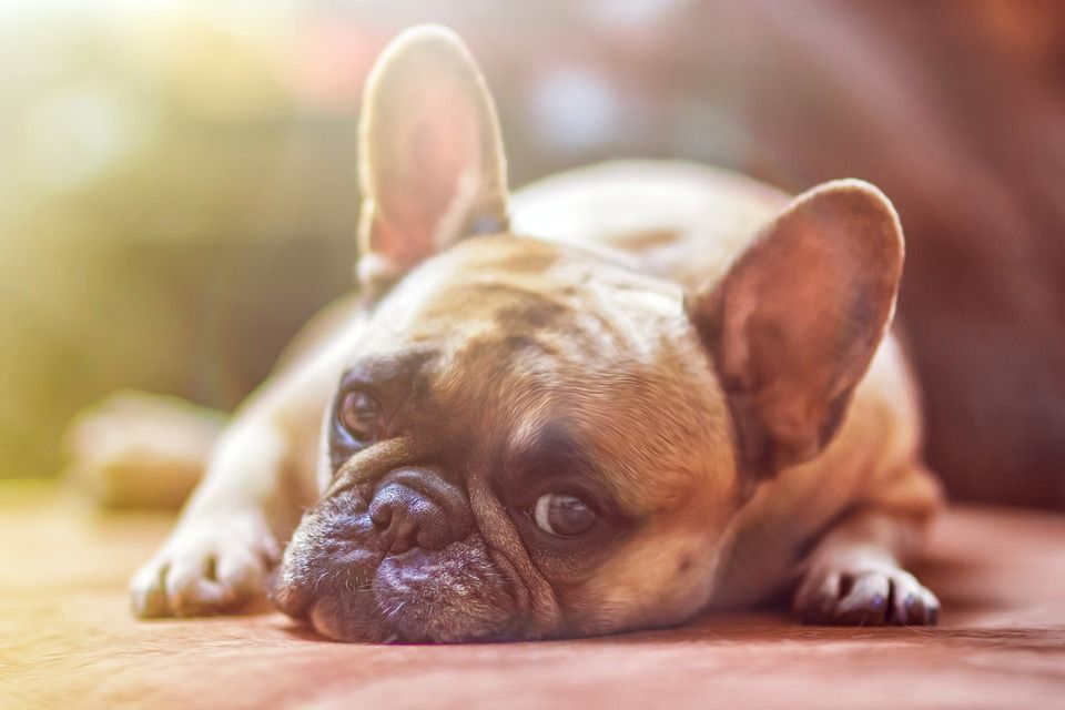Penyebab Mulut Anjing Berbusa
