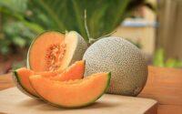 Khasiat Buah Melon