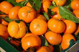 jeruk paling populer