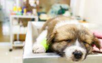 Tips Mengatasi Anjing Muntah