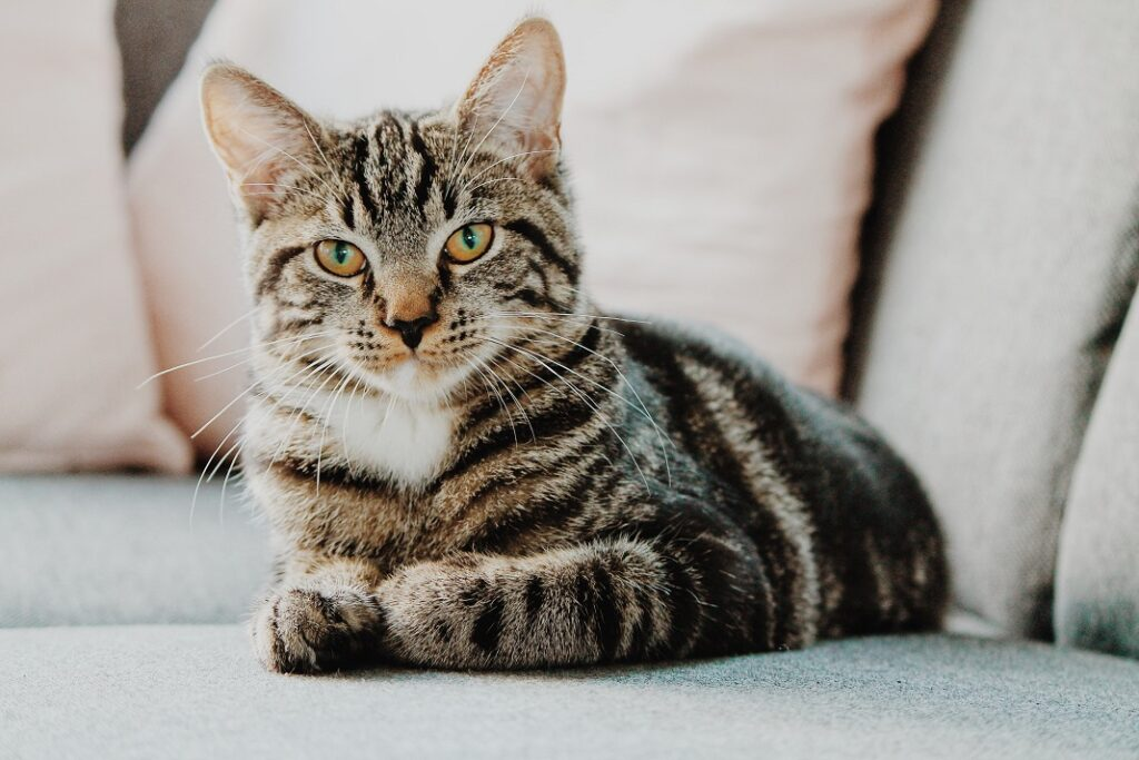 Rumah Ramah Kucing