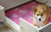 Perawatan Anjing Peliharaan Hamil