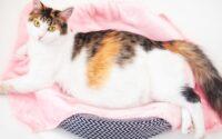 Tanda-Tanda Kucing Melahirkan