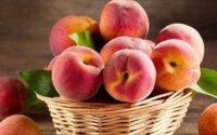 buah persik untuk ibu hamil