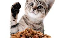 membeli makanan kucing