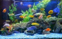 penyebab ikan peliharaan stres