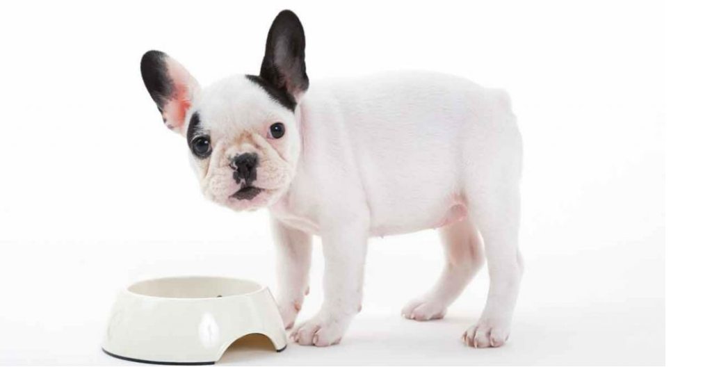 pola makan anak anjing