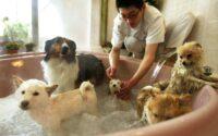 tips grooming anjing di rumah