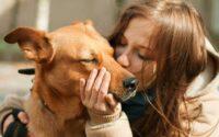 kelebihan anjing sebagai hewan peliharaan