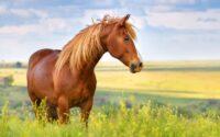 kuda paling populer
