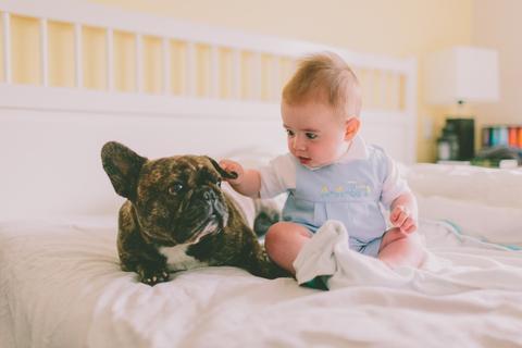 manfaat bayi bermain dengan hewan
