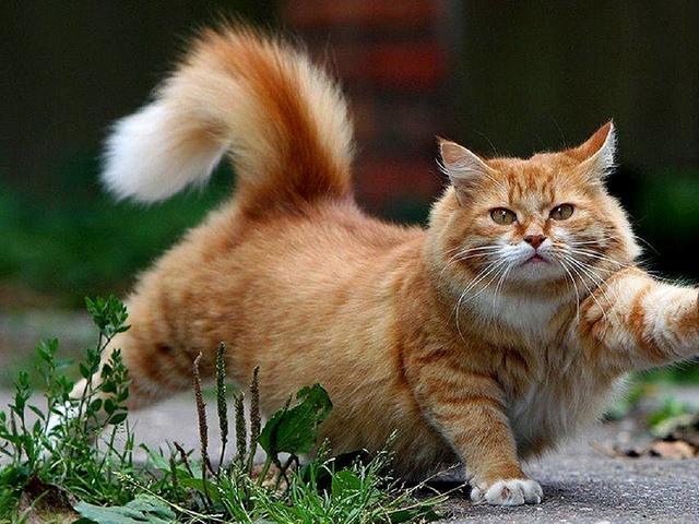 arti gerakan ekor kucing